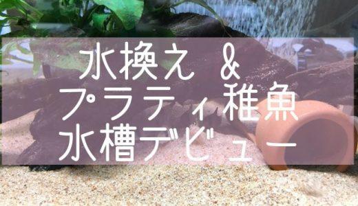 水換え&プラティ稚魚水槽デビュー