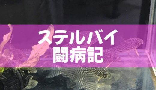 【コリドラス】ステルバイ病気・闘病記!